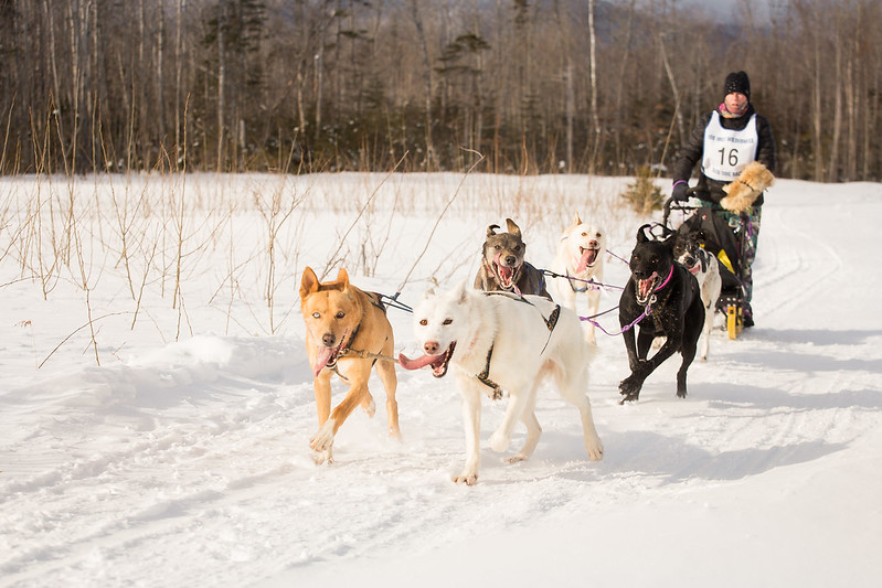 photo of sled dogs pulling a sled and rider